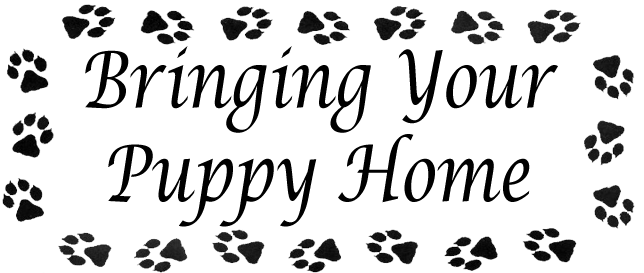 bringing-your-puppy-home-graphic